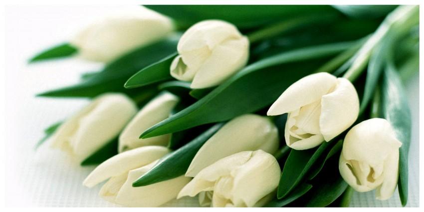Significato Fiori Bianchi.Il Tulipano Bianco Semplicita Ed Eleganza