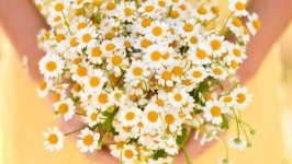 La Margherita, un fiore perfetto per il vostro Matrimonio